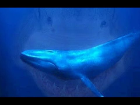 history megalodon shark